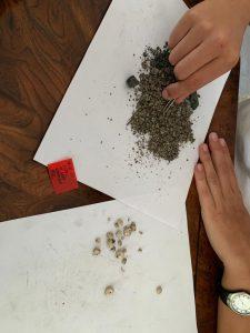 Proceso delicado de separación de elementos para analizar posteriormente en el laboratorio
